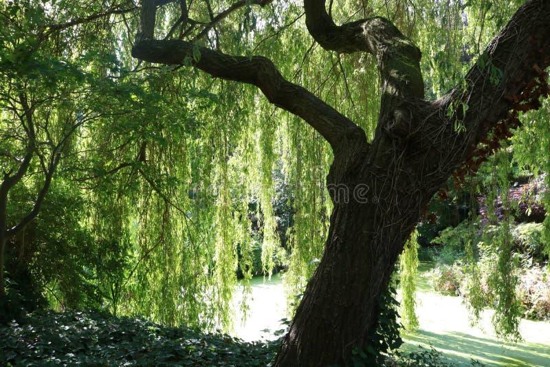 暗藏的感到安全在这棵树下 免版税库存图片