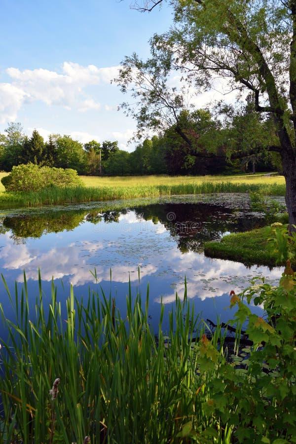 暗藏的池塘 库存图片