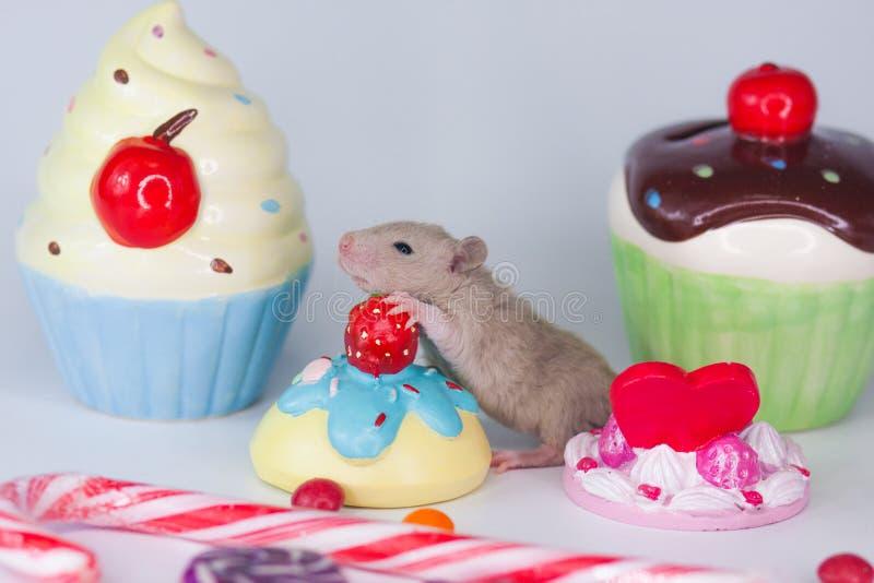 暴食的概念 在五颜六色的甜点背景的老鼠  库存照片