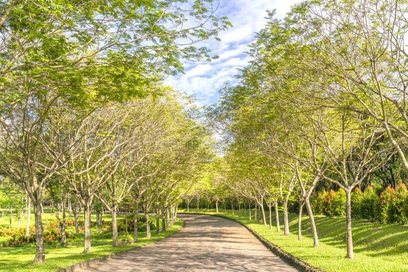 曲折的路在公园 库存图片
