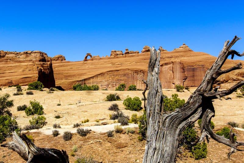 曲拱成拱形精美国家公园 免版税库存图片