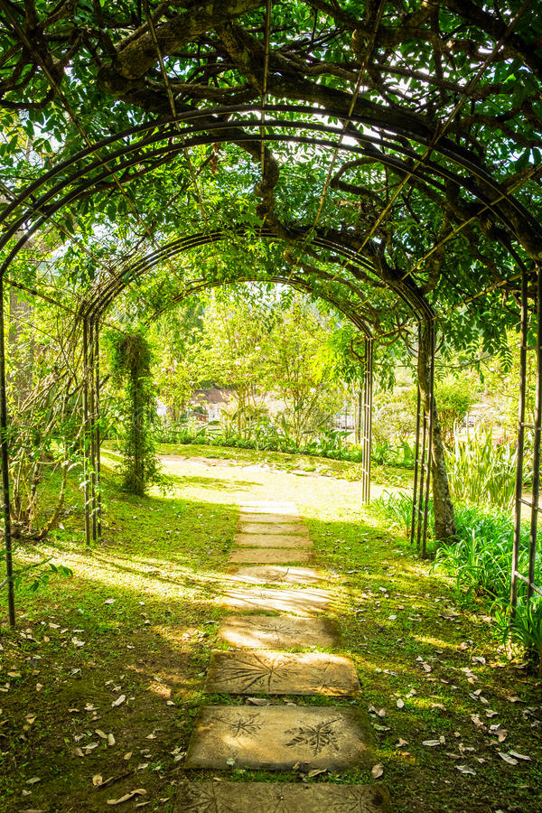 曲拱绿色软的自然路 免版税图库摄影
