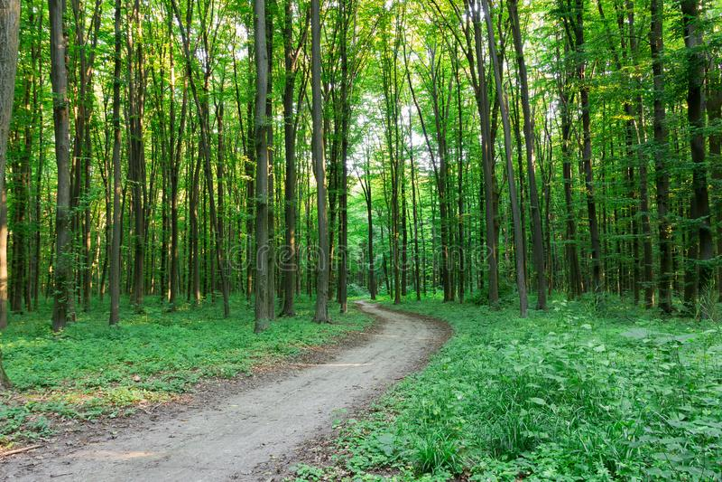 曲线小径通过绿色森林 免版税库存照片