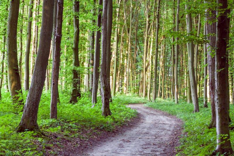 曲线小径通过绿色森林 免版税库存图片