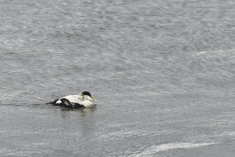 更低的缓慢岸和北海水看法  库存照片