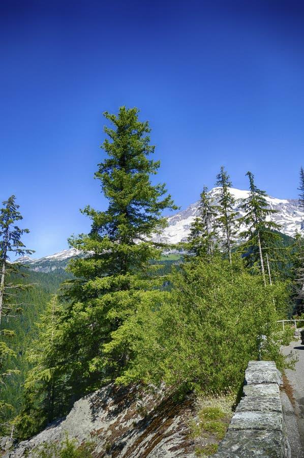 更加多雨Mt火山的山顶从针叶树森林涌现 库存图片