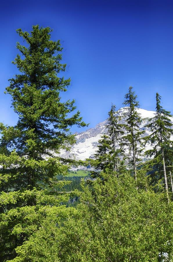 更加多雨Mt火山的山顶从针叶树森林涌现 免版税库存照片