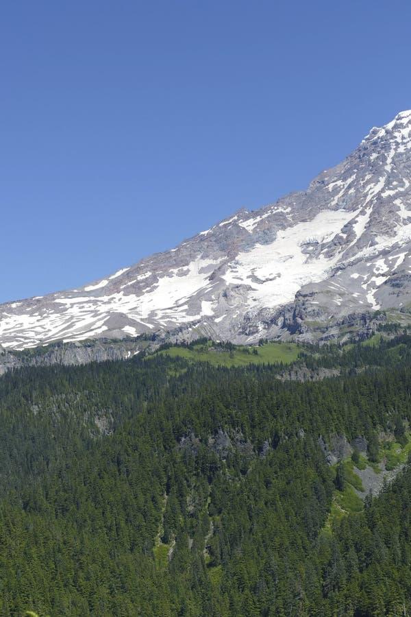 更加多雨Mt火山的山顶从针叶树森林涌现 免版税库存图片