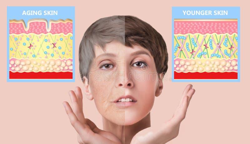 更加年轻的皮肤和老化皮肤 弹力蛋白和胶原 图库摄影