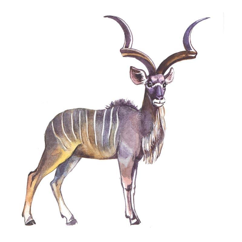 更加极大的kudu 向量例证