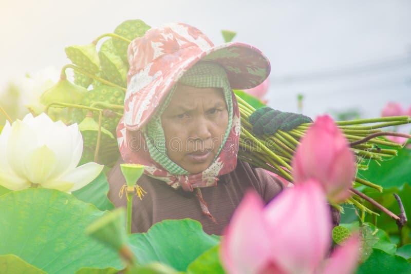 更老的亚裔妇女 免版税库存图片