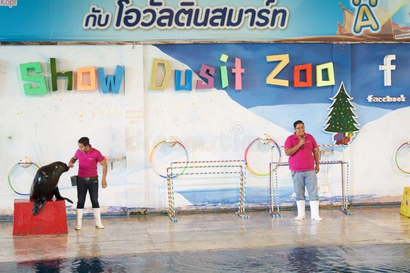 曼谷,泰国, 2018年2月13日,与动物traners的海狮展示 免版税库存图片
