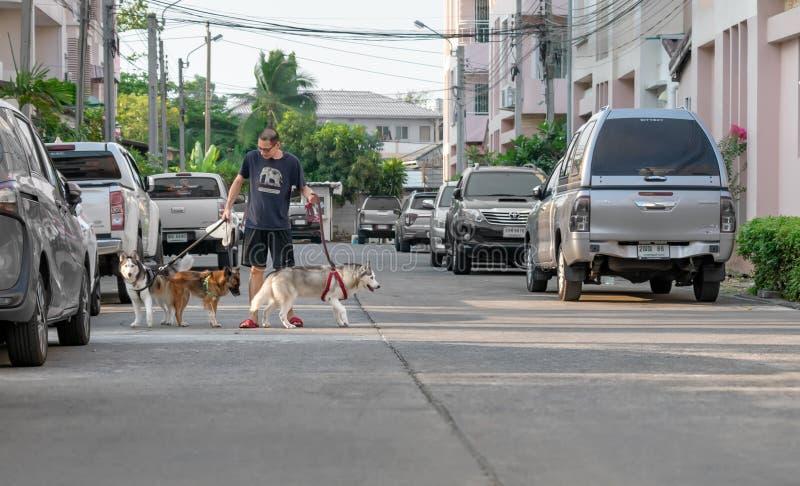 曼谷,泰国- 3月26:身份不明的人在曼谷2019年3月26日遛在自然城市住宅庄园的三条狗 免版税图库摄影