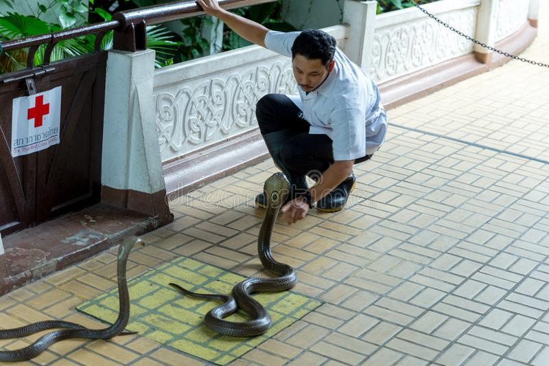 曼谷/泰国- 2018年5月11日:人执行蛇展示和显示对游人在Serpentarium,泰国红十字会社会 库存图片