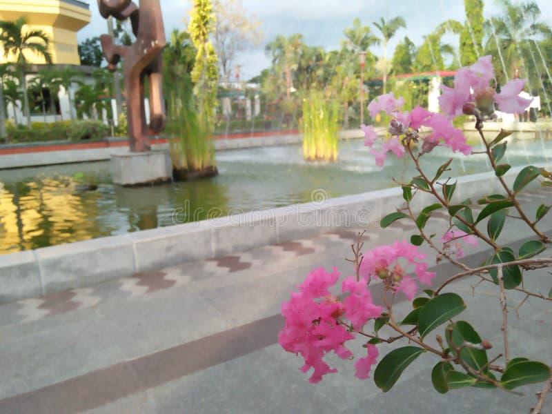 最佳的桃红色花在庭院里第二次 免版税库存图片