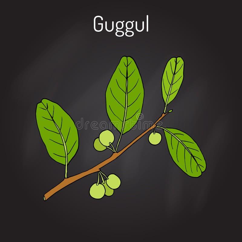最佳的Ayurvedic植物guggul Commiphora wightii或者印地安普渡拉克树, Mukul没药树 皇族释放例证