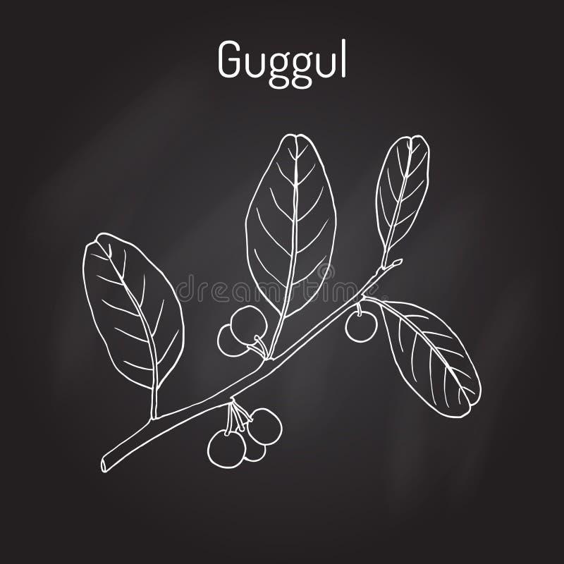 最佳的Ayurvedic植物guggul Commiphora wightii或者印地安普渡拉克树, Mukul没药树 库存例证
