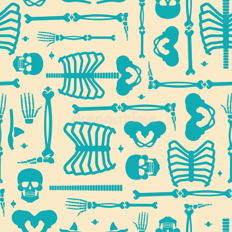最基本的无缝解剖学人的样式 骨骼系统十字架s 库存例证