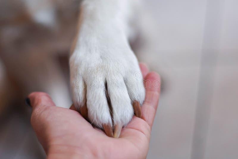 最好的朋友 人和动物连接 信任和友谊的概念 库存照片
