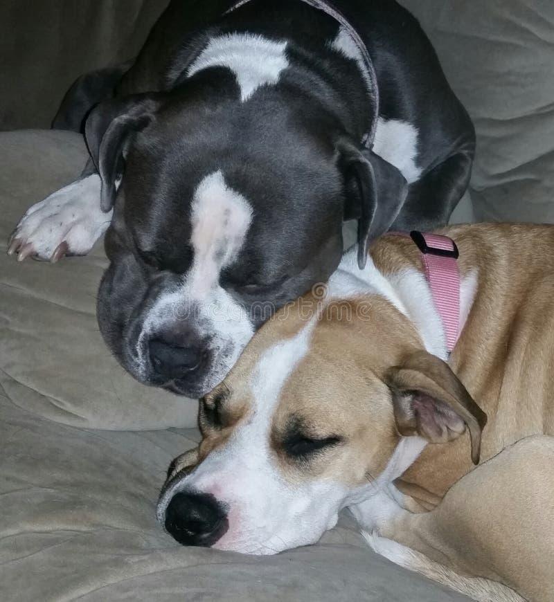 Download 最好的朋友 库存照片. 图片 包括有 朋友, 拥抱, 人兽交, 采取, 休息 - 59101932