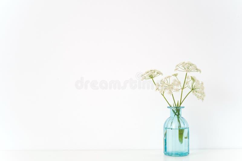 最小的室内内部 有Aegopodium花束的透明蓝色花瓶在白色背景的桌上 逗人喜爱的软的家 免版税图库摄影