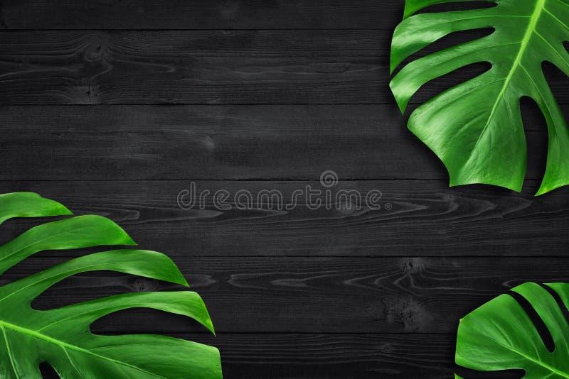 最小的构成舱内甲板被放置的绿色热带叶子 创造性的布局回归线留给框架拷贝空间在黑暗的木背景 库存照片