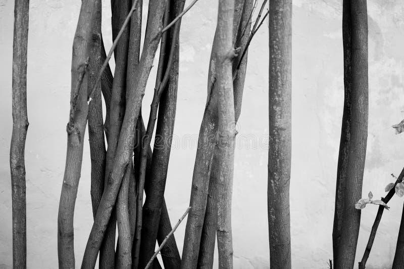 最小的黑白树 免版税库存照片
