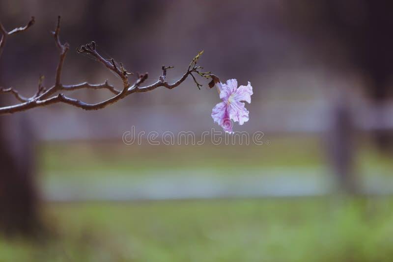 最浪漫的桃红色花 库存照片