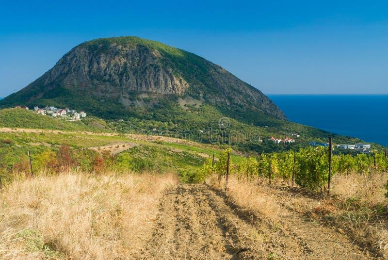 从最近的葡萄园的看法在Gurzuf手段附近的一座熊(Ayu Dag)山的 库存照片