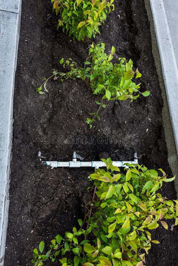 最近种植了中间在遏制和新的边路之间、新鲜的植物和土和pvc灌溉管子和连接器 免版税库存照片