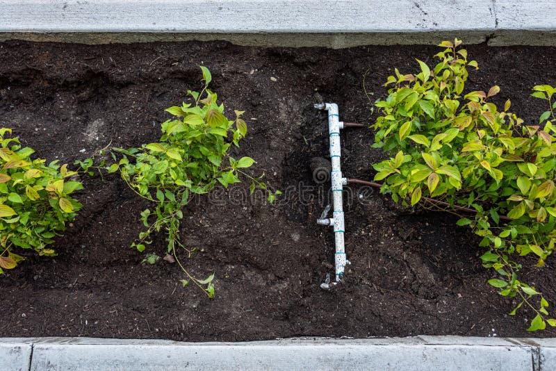 最近种植了中间在遏制和新的边路之间、新鲜的植物和土和pvc灌溉管子和连接器 免版税库存图片