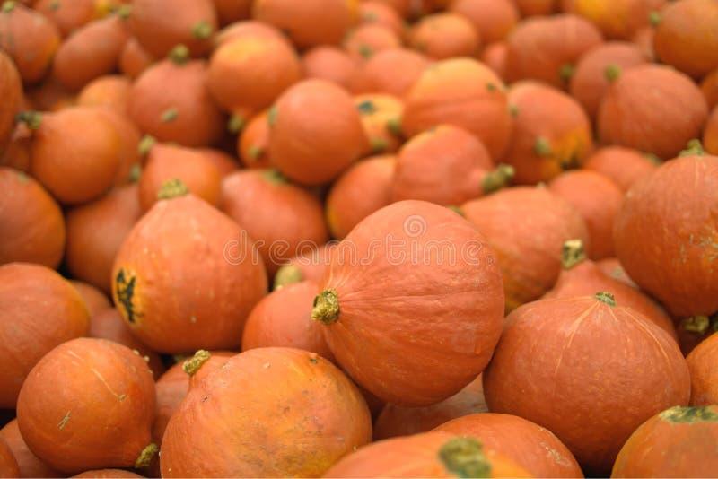 最近被收获的橙色南瓜待售 免版税库存照片