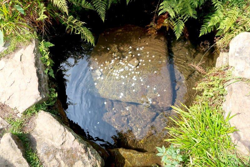 最长的捷克河伏尔塔瓦河的春天在Sumava国立公园在捷克 在小的池塘的底部的硬币 免版税库存图片