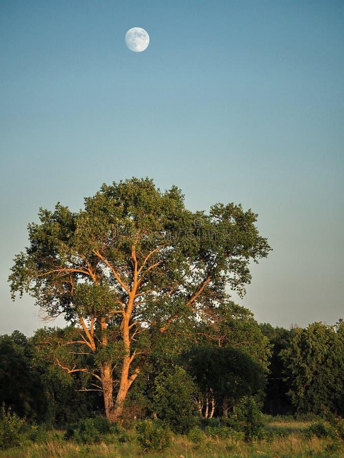 月亮上升和光在绿色森林 免版税图库摄影