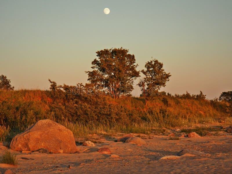 月亮上升和光在绿色森林 免版税库存图片