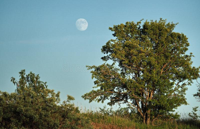 月亮上升和光在绿色森林 库存图片