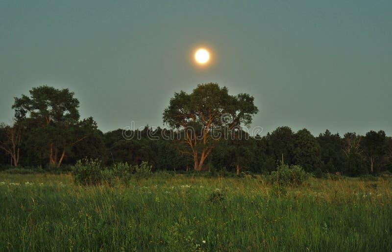 月亮上升和光在绿色森林 库存照片
