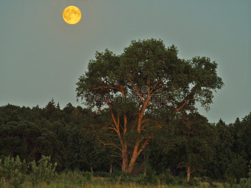 月亮上升和光在绿色森林 免版税库存照片