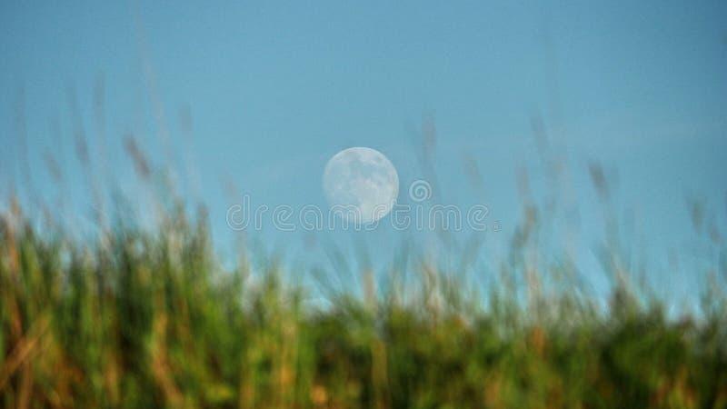 月亮上升和光在绿色领域 免版税库存照片