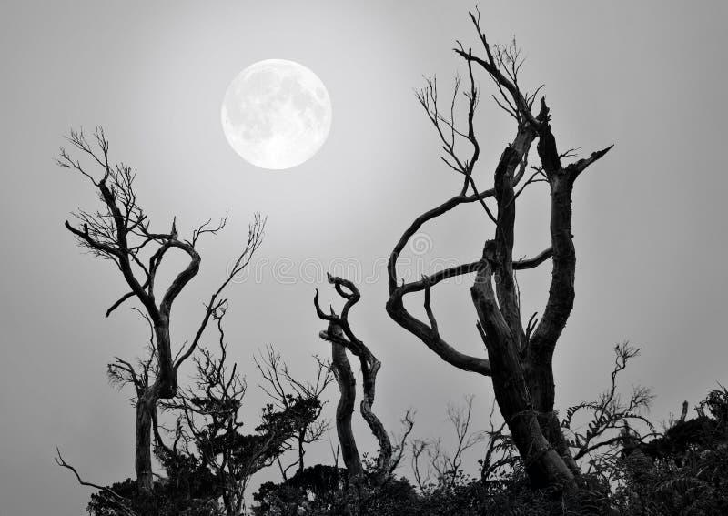 月亮低声说话者 免版税库存图片