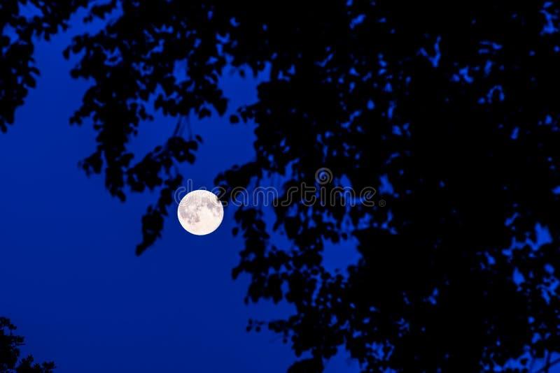 月亮在森林里 免版税图库摄影