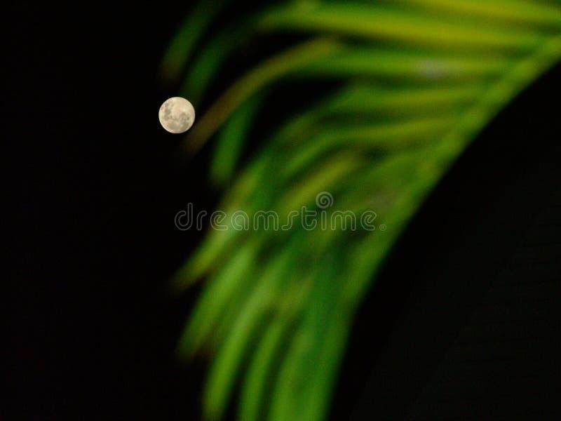 月亮天堂 库存照片