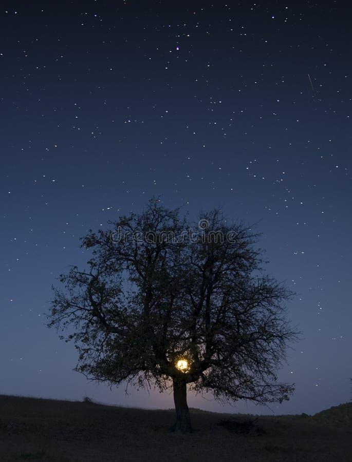 月亮晚上担任主角结构树 免版税图库摄影