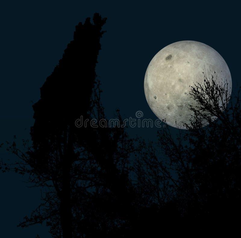 月亮晚上   库存图片