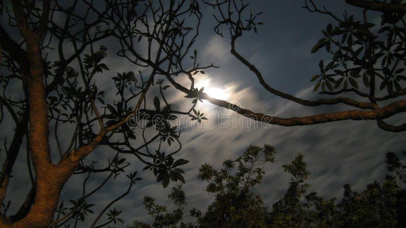 月亮淋浴了夜 免版税库存照片