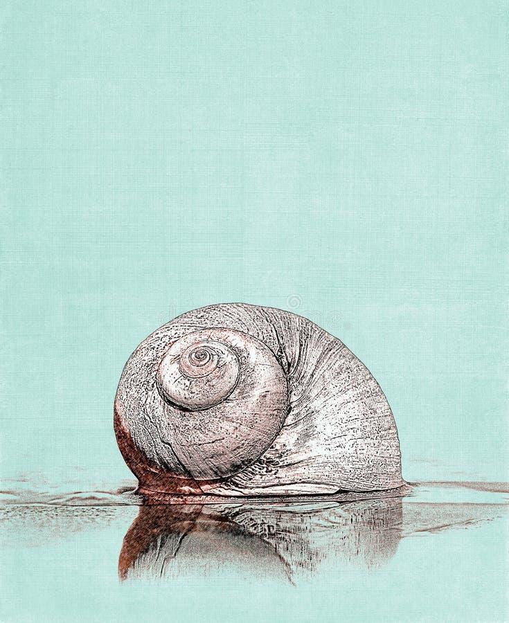 月亮蜗牛例证 库存图片