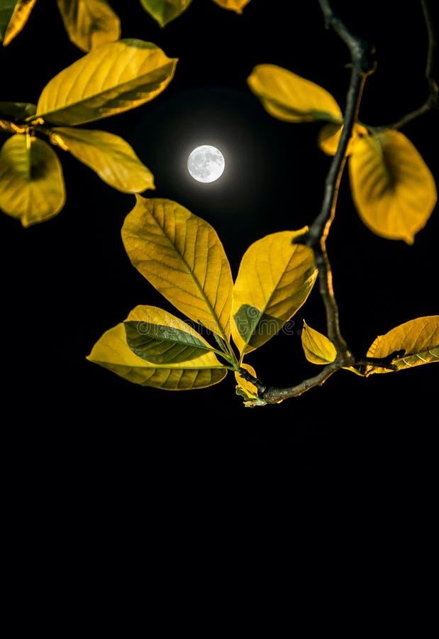 月光在夜下 免版税库存照片