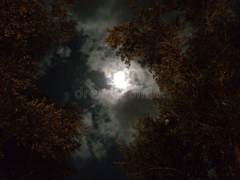 月光树 免版税库存照片