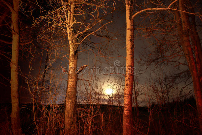 月光树 库存照片