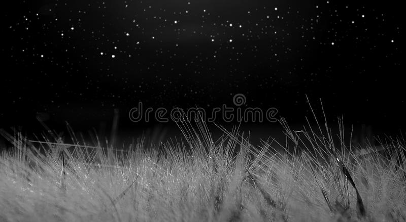 月光阐明的麦田,与星的黑暗的背景 库存照片